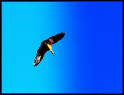 eagle-john-1